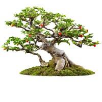 Декоративные деревья, цветы, муляжи